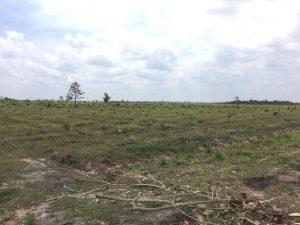 カシューナッツ栽培